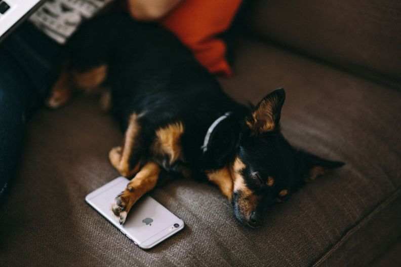 kaboompics_Puppy sleeping with iPhone 6.jpg